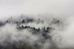 Foggy forest. Mysterious and foggy forest after rainy night Royalty Free Stock Photo
