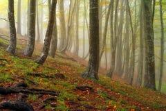 Autumn landscape. Mystic colored foggy forest Stock Image