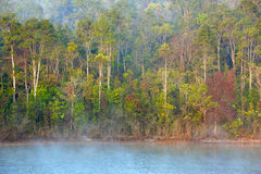 Foggy forest. In national park of Thailand Stock Photo