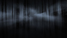 Foggy forest at night Stock Image