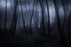 Foggy forest at night Stock Photography