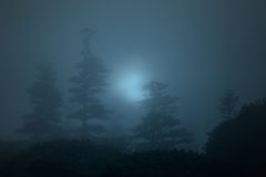 Foggy forest at night Stock Photos