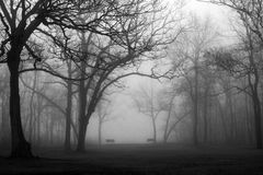 Foggy forest park in black and bhite