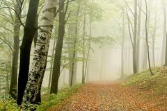 Foggy forest path in autumn Royalty Free Stock Photography