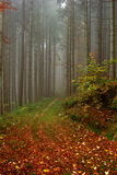 Foggy forest path in autumn morning Stock Photo