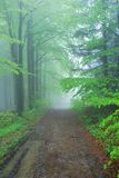 Foggy Forest Path Stock Image
