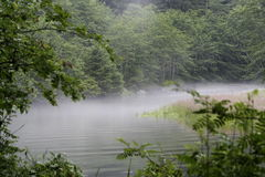 Foggy Forest Scene. Fog covers a rippling pond in the middle of a forest Royalty Free Stock Image