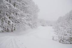 Foggy forest ski track Royalty Free Stock Photos