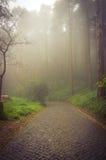 Foggy forest stone path Stock Photos