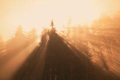 Foggy forest sunrise Stock Images