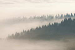 Foggy forest, at sunrise. In transylvanian mountains Stock Photos