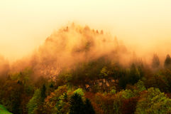 Foggy forest on Swiss Alps.  royalty free stock photography