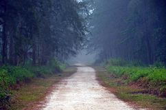 Foggy Forest Trail Royalty Free Stock Photography