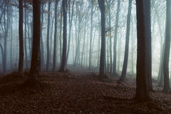 Foggy forest trail. Gloomy dark autumn day. Filtered image Stock Image