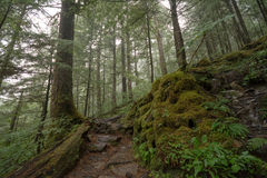 Foggy Forest. A trail going through a foggy mountain rainforest Stock Photo