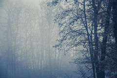 Foggy forest with trees Royalty Free Stock Image