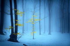 Foggy forest trees during winter Royalty Free Stock Photos