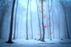Foggy forest trees during winter Royalty Free Stock Photo