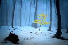 Foggy forest trees during winter Stock Photos