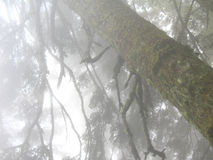 Foggy forest Royalty Free Stock Photography