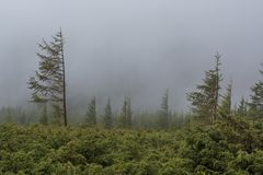 Foggy forest under the dark cloudy sky at the mountain. In Ukraine Royalty Free Stock Image