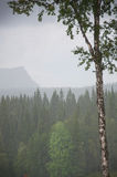 Foggy forest view Royalty Free Stock Images