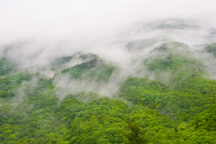 Foggy forest view of Seorak-san National Park Royalty Free Stock Photography
