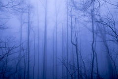 Foggy forest in winter Stock Photos