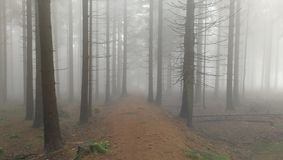 Foggy forest royalty free stock photo