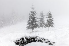Foggy forest in winter Royalty Free Stock Photo