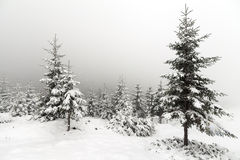 Foggy forest in winter Royalty Free Stock Photography