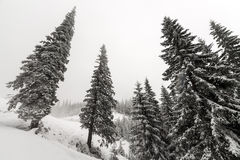 Foggy forest in winter Stock Image
