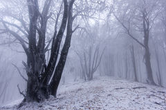 Foggy forest in winter Stock Photography