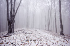 Foggy forest in winter Stock Images