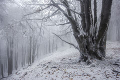 Foggy forest in winter Royalty Free Stock Images