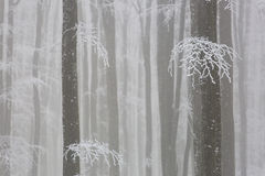 Foggy forest in winter Stock Photo