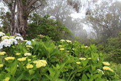 Foggy forrest on Kauai Royalty Free Stock Photo