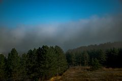 Foggy forrest on mountain in morning royalty free stock photo