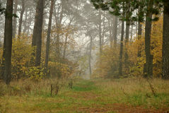 Foggy forrest Stock Photo