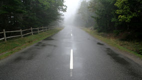 Foggy Future. A road leading through a forest cast in fog Stock Photography