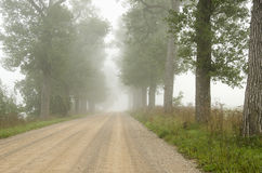 Foggy gravel road surrounded by old trees alley. Royalty Free Stock Photo