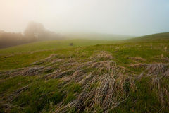 Foggy Green Pasture Stock Photos