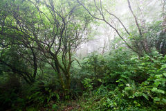 Foggy Haunted Forest Stock Photo