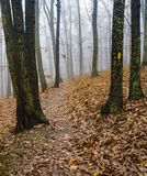Foggy Hiking Trail in the Mountains of Virginia, USA royalty free stock photography