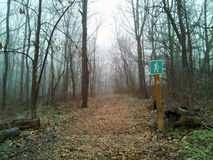 A foggy hiking trail. Taking a walk on a foggy hiking trail in the woods Royalty Free Stock Photography