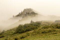 Foggy Hilltop. A hilltop in the alps overgrown with conifers, shrouded in fog royalty free stock photography