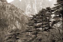 Foggy Huangshan mountains. Black and white toned photo Royalty Free Stock Images