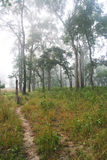 Foggy Jungle Trail Royalty Free Stock Photography