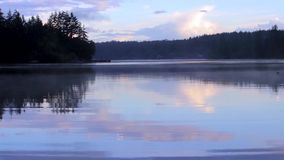 Foggy lake in the morning. Foggy lake with birds grass and trees on a rainy day stock video footage