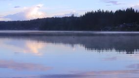 Panning over foggy lake. Foggy lake with birds grass and trees on a rainy day stock video